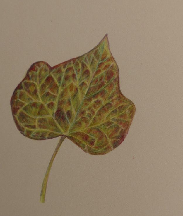 339 Ivy