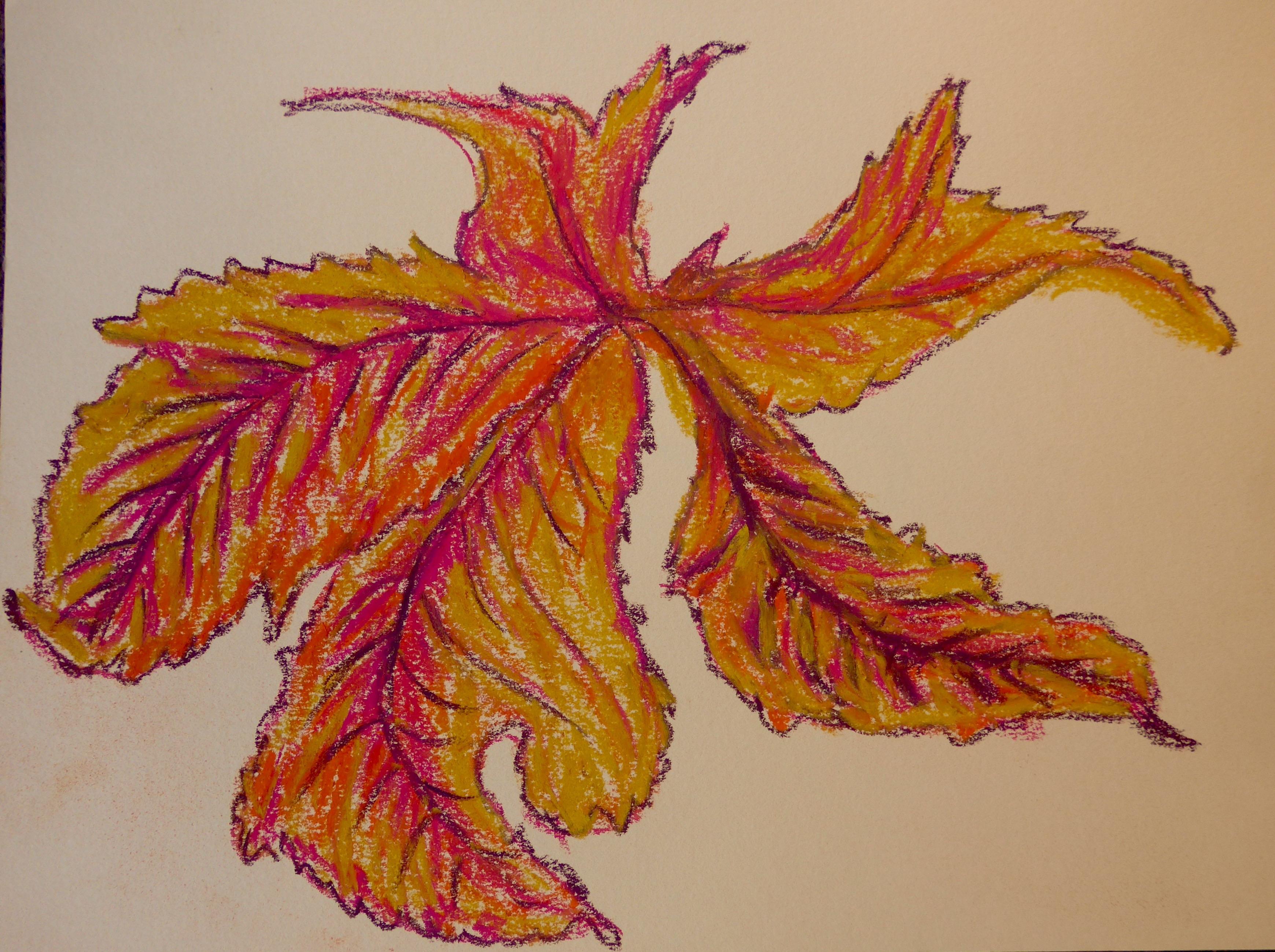 342 Maple Leaf