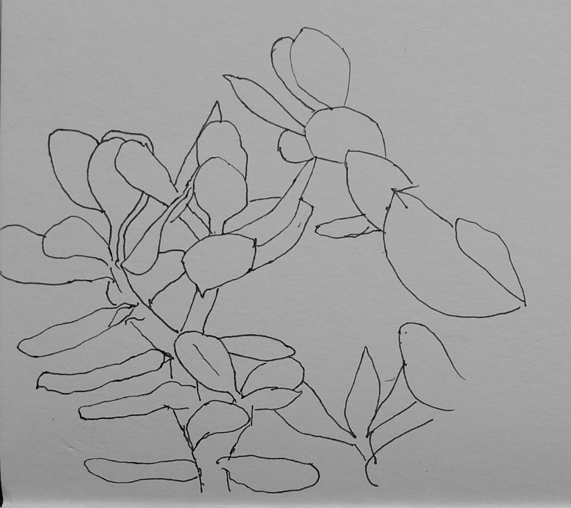 343 Jade plant