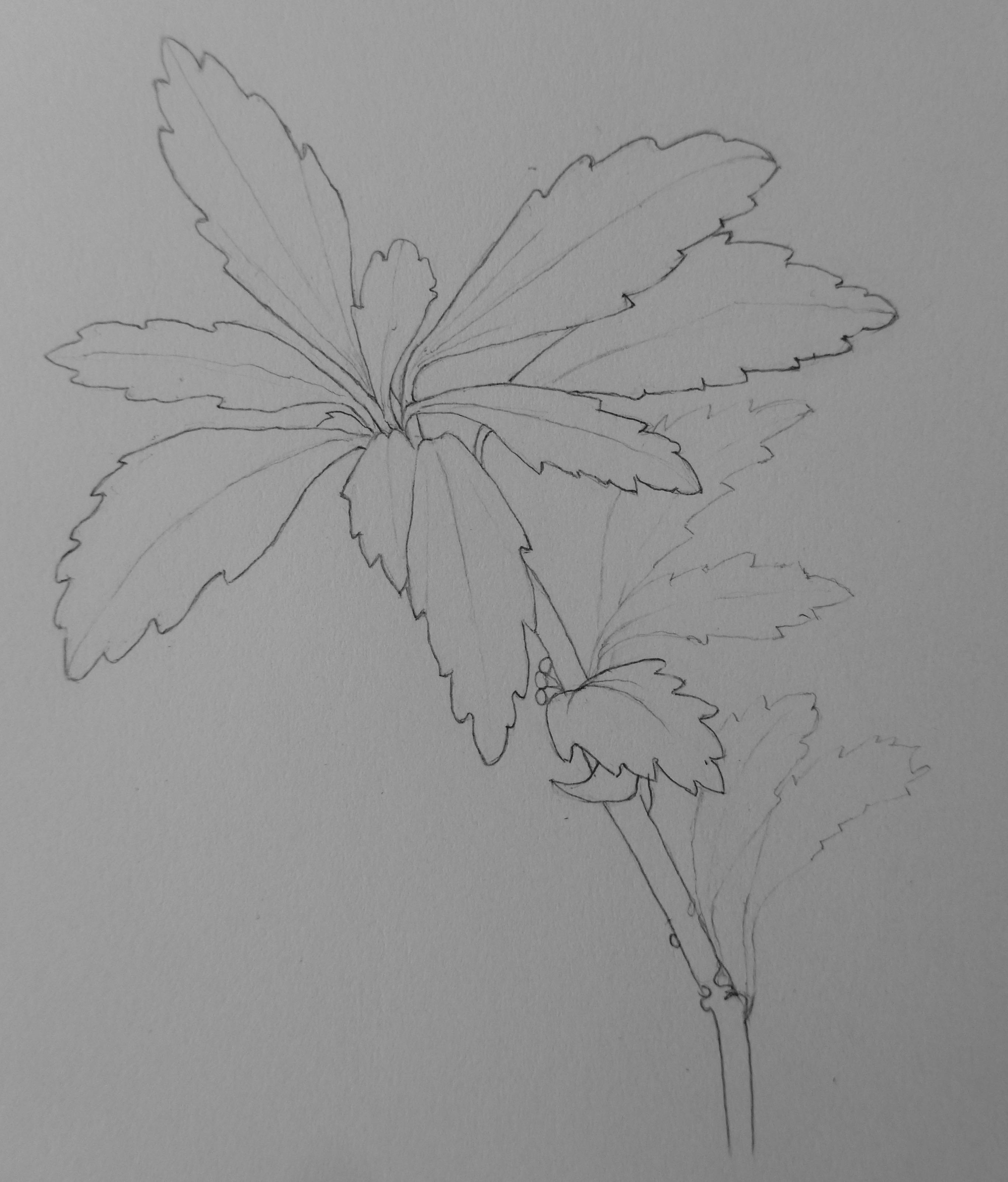355 Shrub leaves