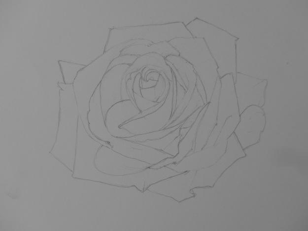 360 Rose