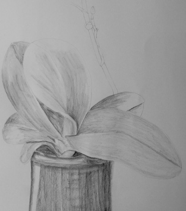 364 Orchid Leaves