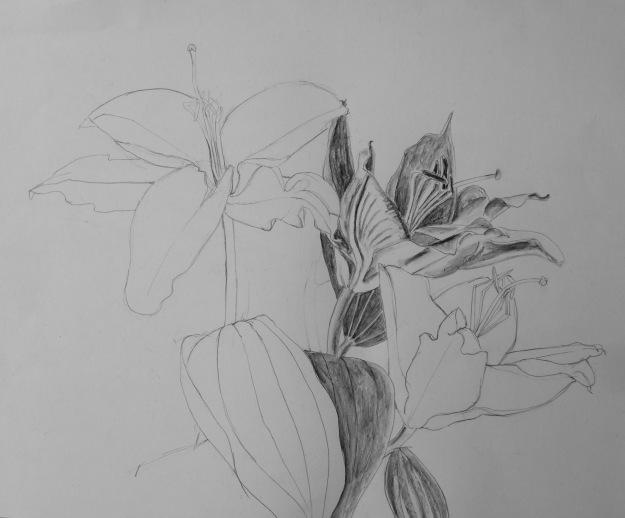 365 Lillies