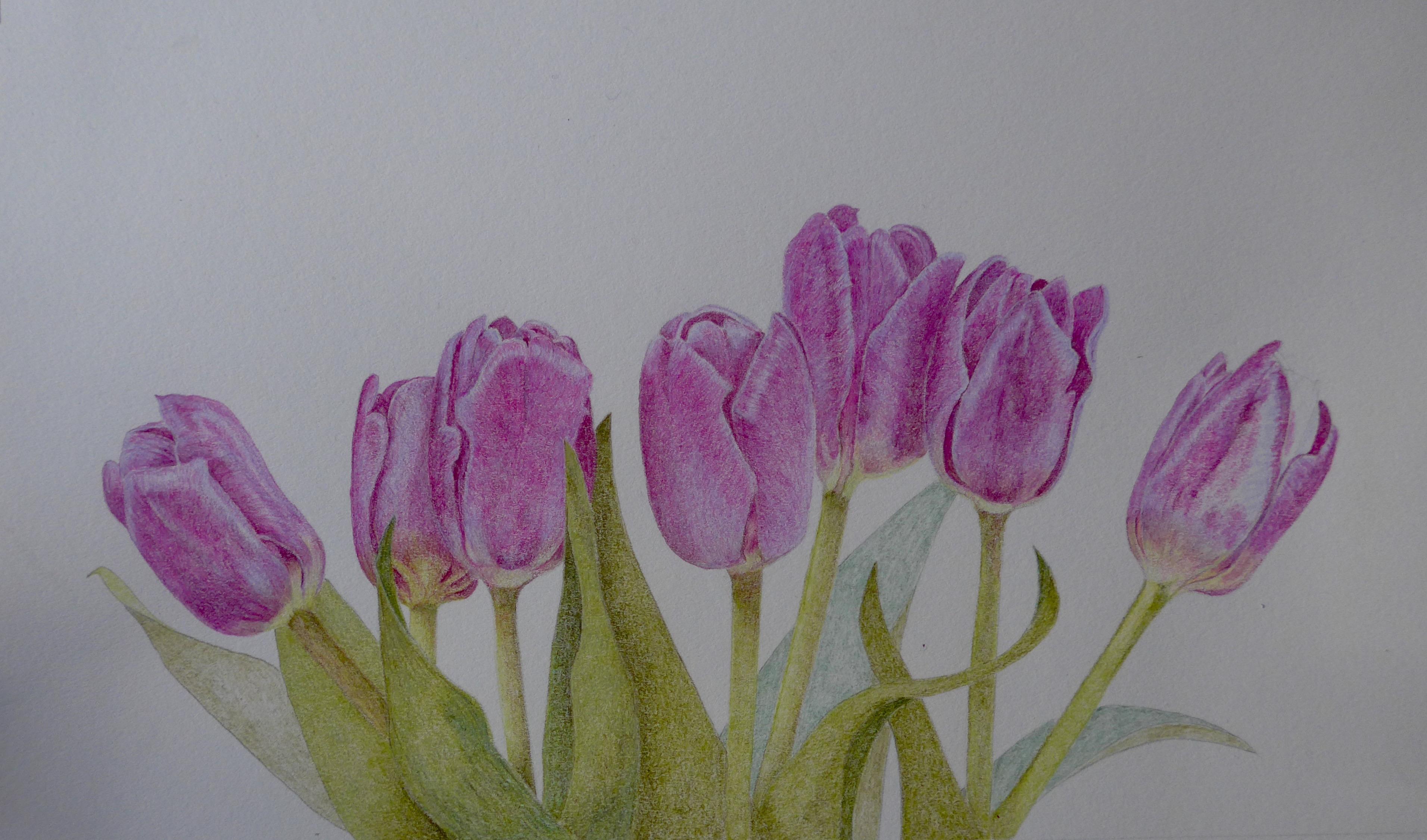 Nearly finished tulips