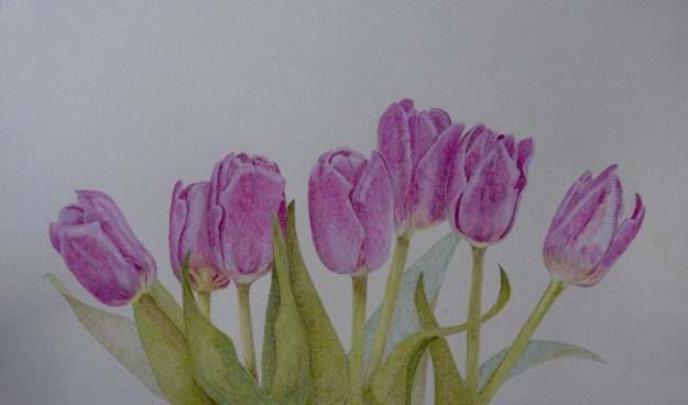 Nearly finished tulips